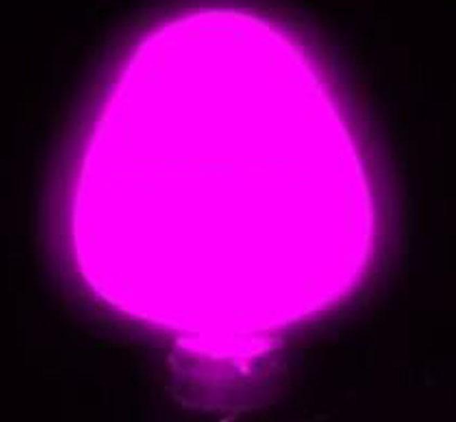 C-61夜光粉紫色